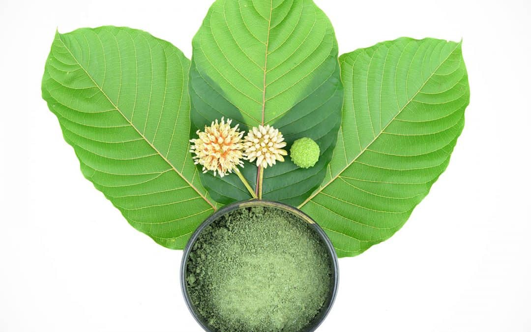 Knowing Your Herbs Correctly: 3 Essential Facts on Kratom